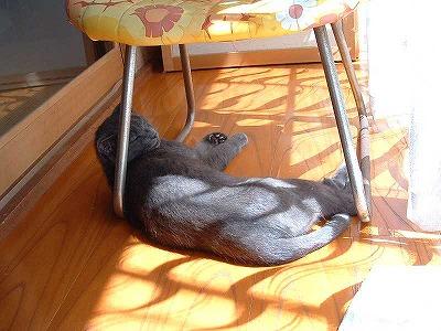 実家のネコ4