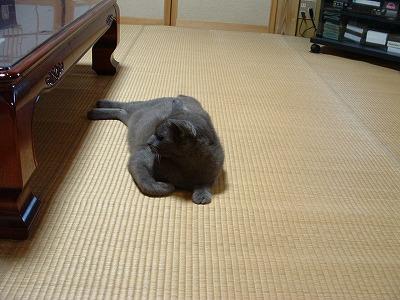 実家のネコ2